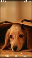 Screenshot of Cute Live Wallpaper
