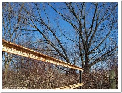 treesandbarrier-shenlake1036-500-lkh