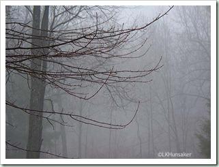 TreesInFog-LKH-Apr2011