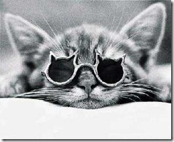 cat_with_glasses