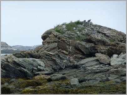 Osprey Nest on Ram Island