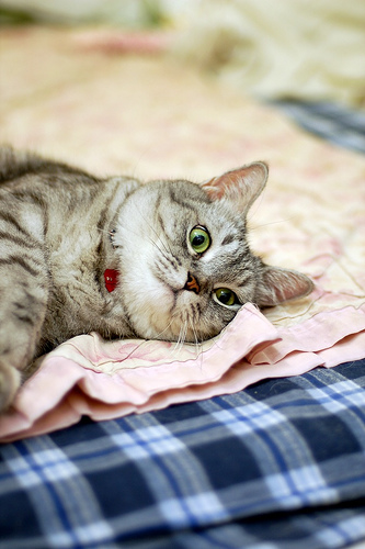 cute cat lying in bed