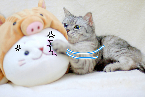 cute cat swatting the stuffed animal
