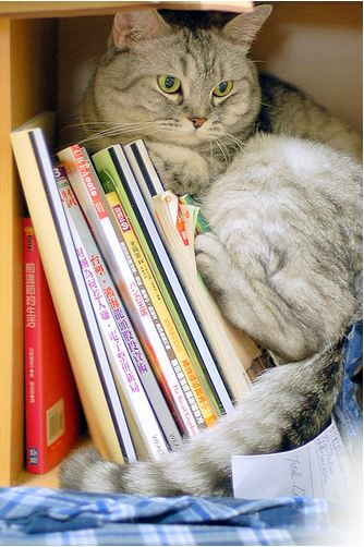 cute cat resting on a pile of books
