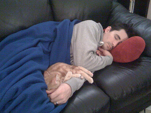 cute ginger kitten napping with daddy