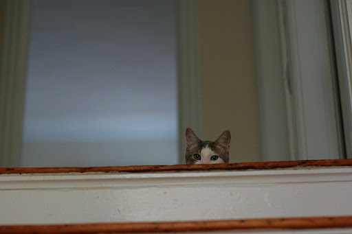cute kitten peeking down the stairs