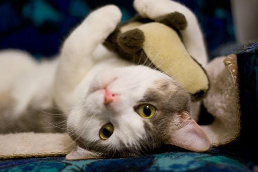 cute cat cuddling stuffed toy