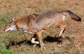 benwolft.jpg
