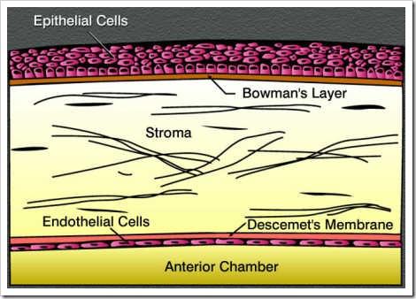 corneal epithelium