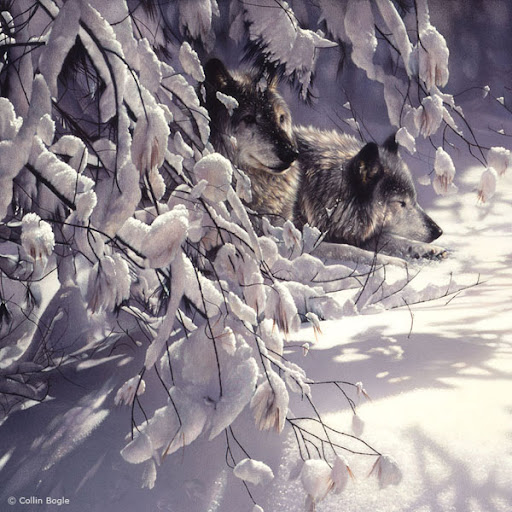 40 Beautiful Wildlife Paintings by Collin Bogle