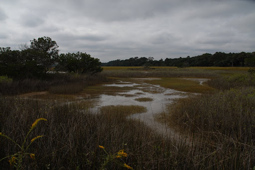 Marsh, Botany Bay Plantation,