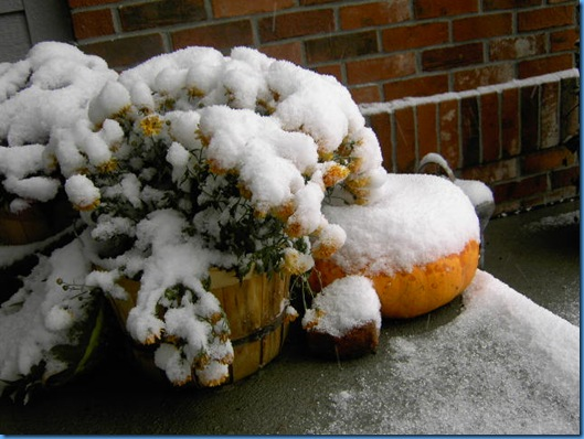 Snow on the Pumpkins 002