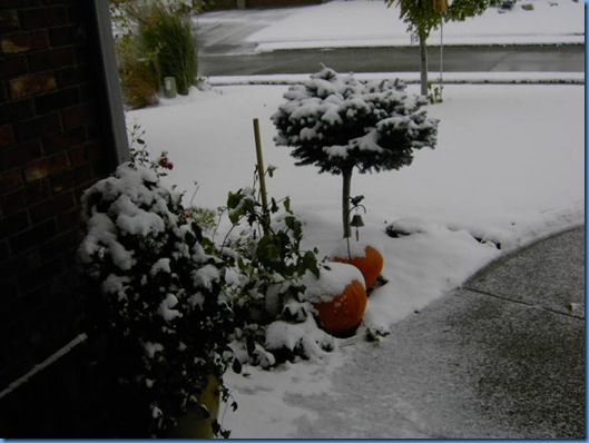 Snow on the Pumpkins 001