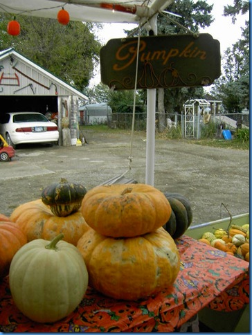 Pumpkin Farm Oct 2009 025