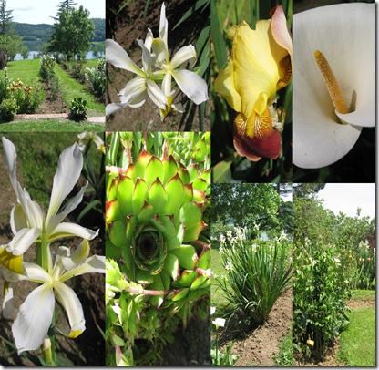 fiori camilli1