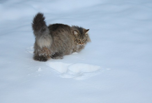 Элвис на снегу