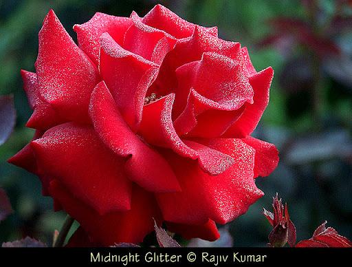 Midnight Glitter © Rajiv Kumar