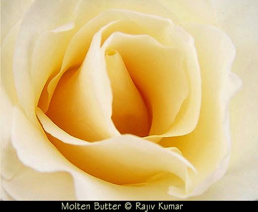 Molten Butter © Rajiv Kumar