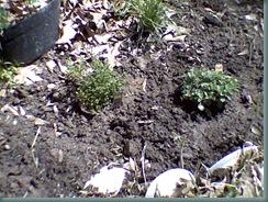 garden315002