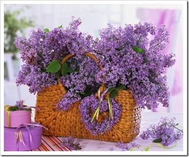 flores lilas