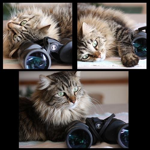 Emma Binoculars