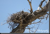 Hawk Nest3