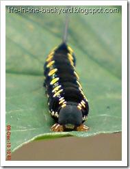 Caterpillars Attack 12