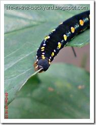 Caterpillars Attack 8
