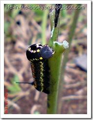 Caterpillars Attack 11