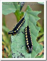 Caterpillars Attack 17