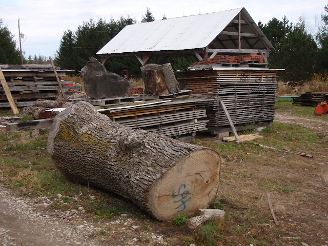 Little baby logs