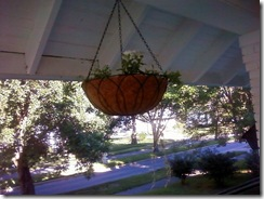 hanging basket 2