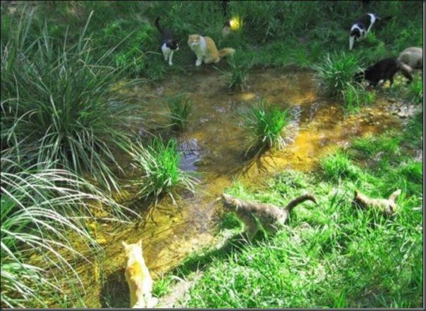 A Terra Prometida para Gatos (33)