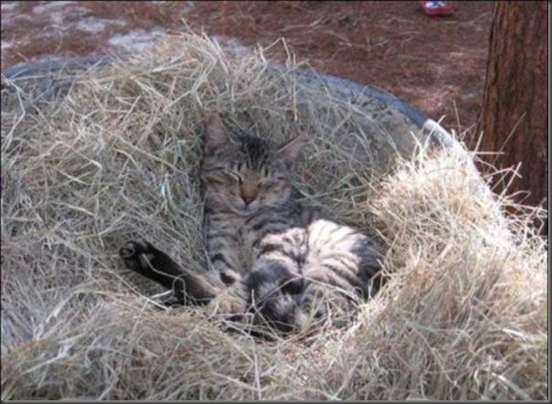 A Terra Prometida para Gatos (39)