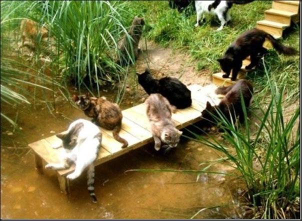 A Terra Prometida para Gatos (27)