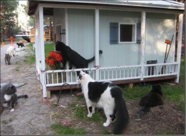 A Terra Prometida para Gatos (18)
