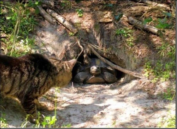 A Terra Prometida para Gatos (14)