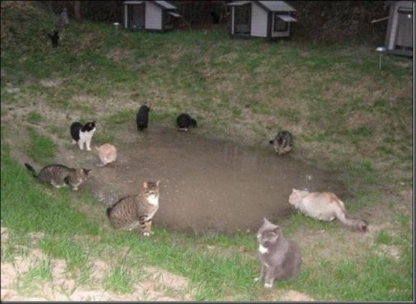 A Terra Prometida para Gatos (2)