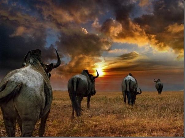 Lindas imagens da africa (2)
