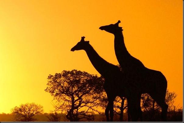 Lindas imagens da africa (25)