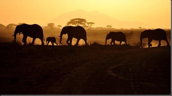 Lindas imagens da africa (17)