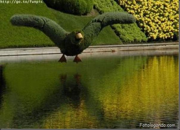 Lindo jardim (6)