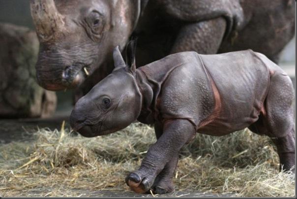 Filhotes com seus pais no mundo animal (19)