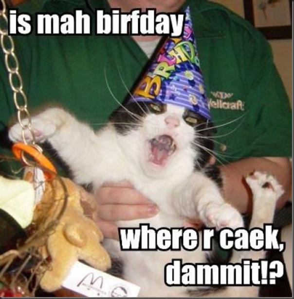 Comemorações de aniversário de gatos (2)