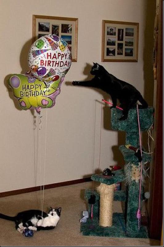 Comemorações de aniversário de gatos (1)
