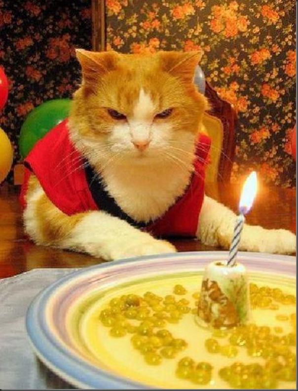 Comemorações de aniversário de gatos (5)