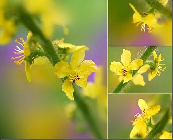 Lindas imagens de flores (24)