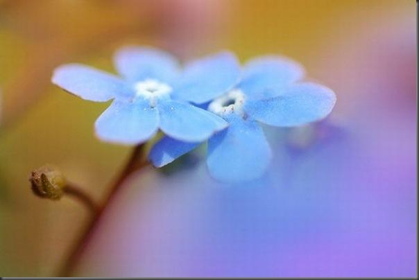 Lindas imagens de flores (23)