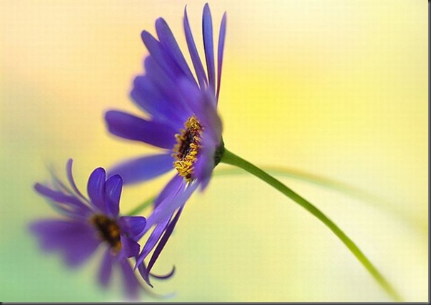 Lindas imagens de flores (17)