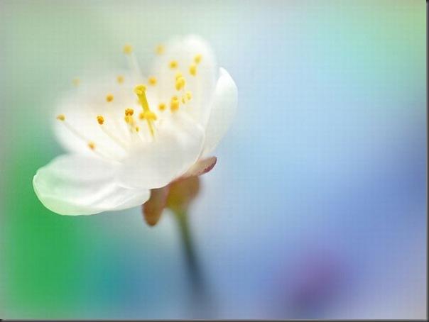 Lindas imagens de flores (16)